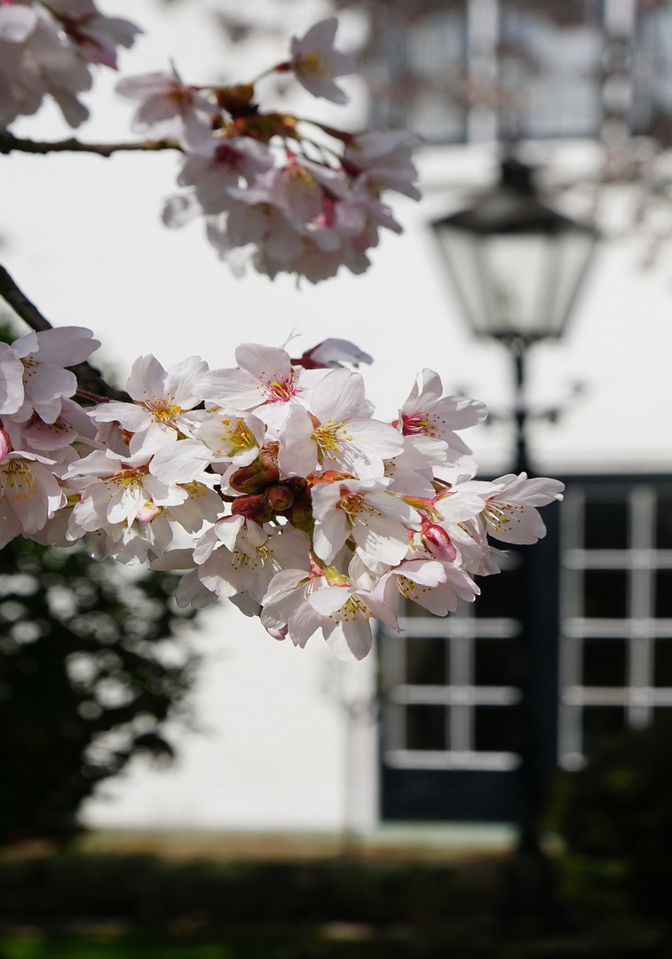 Frühling in Zoutelande