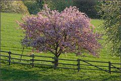 Frühling ists
