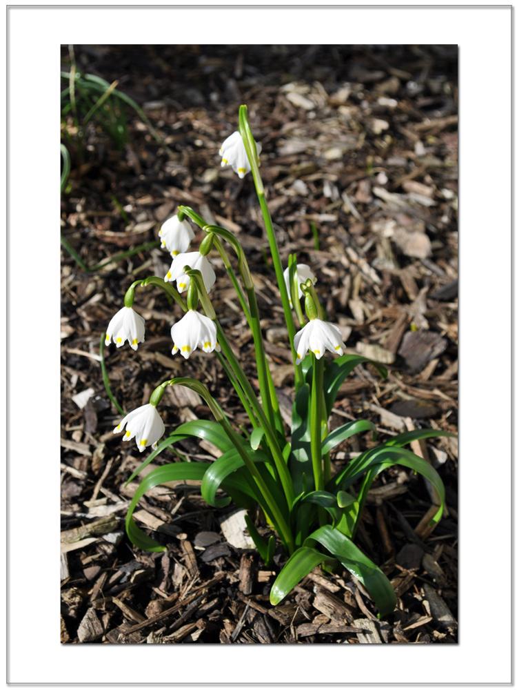 Frühling ist's ! (3)