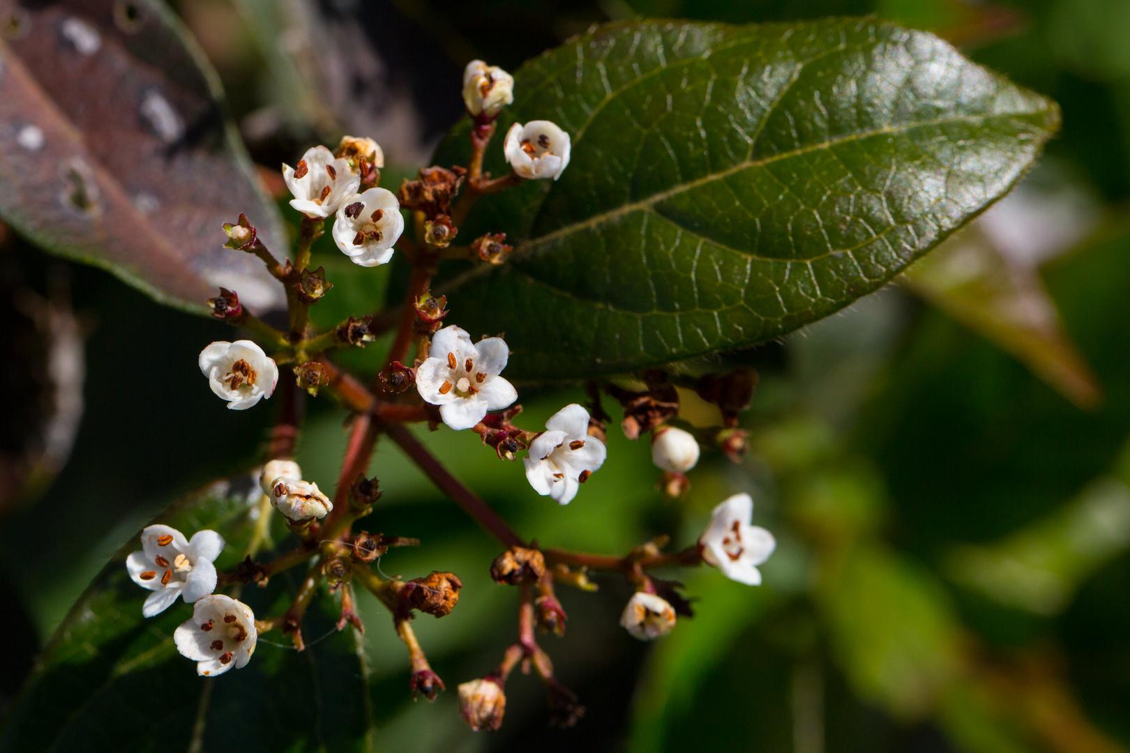 Frühling (IV)