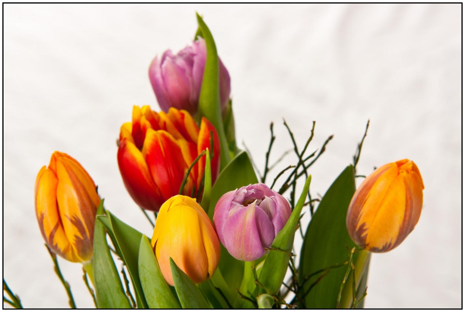 Frühling... jetzt geht's langsam los!!