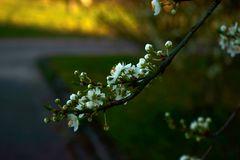 Frühling kommt zaghaft aber früh...