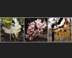 Frühling lässt ein laues Band . . .