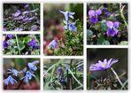 Frühling läßt -