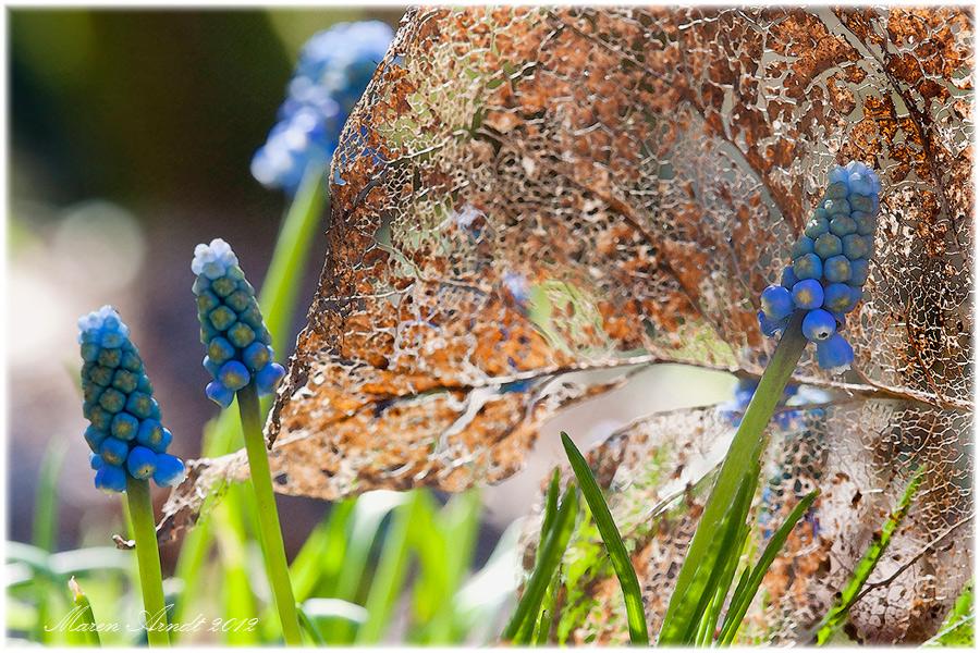 Frühling läßt sein blaues Band ....