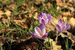 Frühling läßt sein blaues Band wieder flattern durch die Lüfte,....