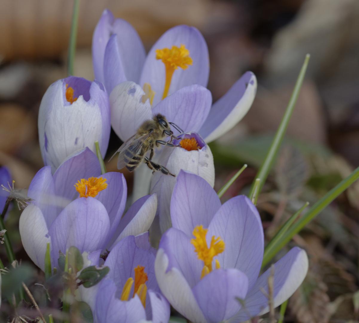 Frühling liegt in der Luft
