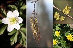Frühling liegt in der Luft ...