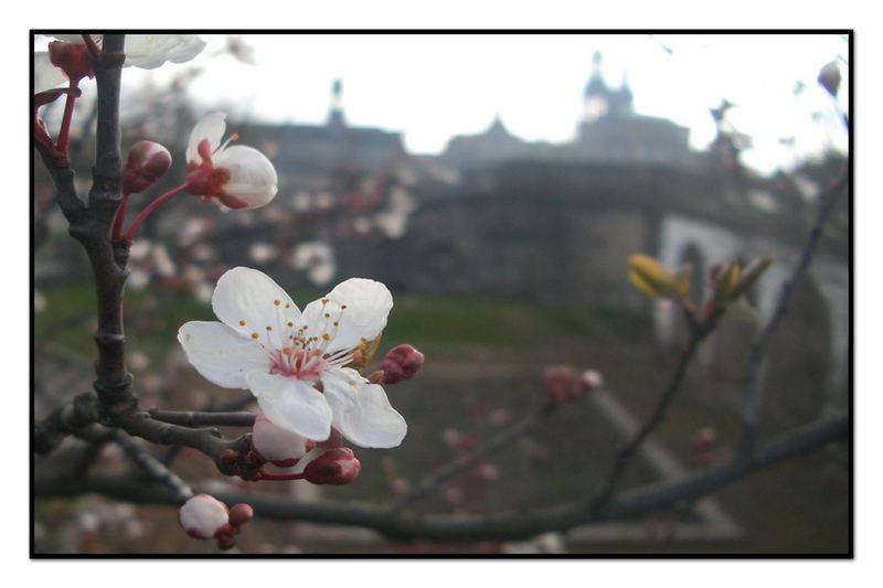 Frühling mit Dresdner Kulisse