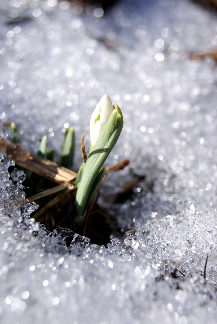 Frühling? Oder noch Winter?