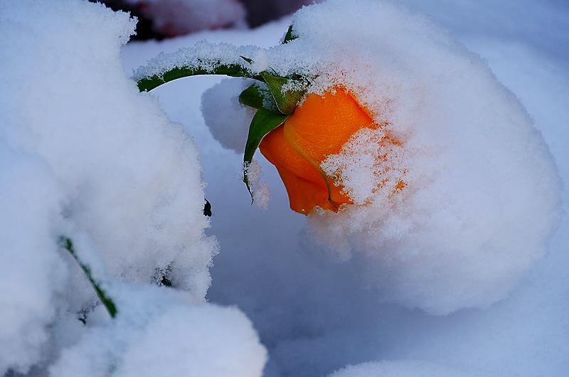 Frühling oder Winter?