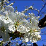 Frühling prall