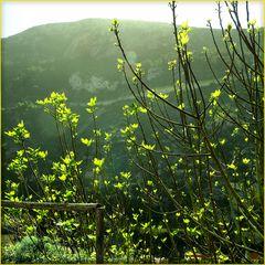Frühling  /  primavera  (1)
