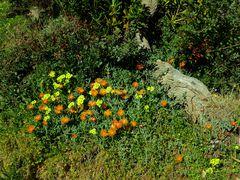 Frühling  /  primavera  (3)
