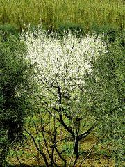 Frühling  /  primavera  (5)