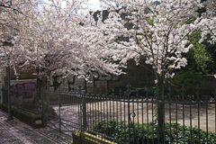Frühling pur