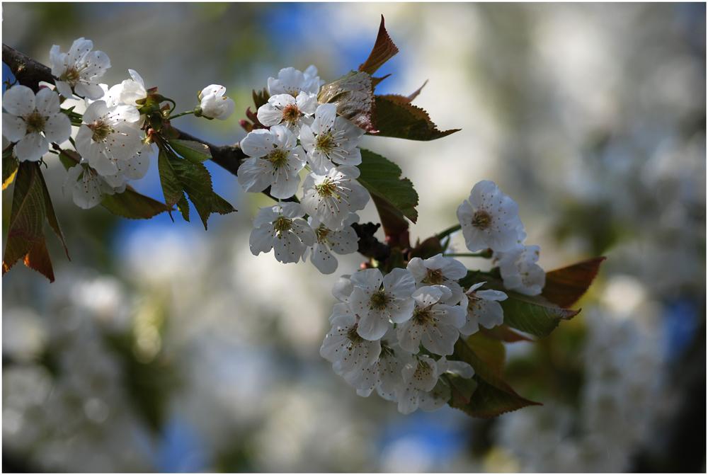 Frühling-pur...