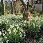 Frühling schnuppern
