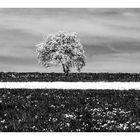 Frühling - schwarz - weiß -