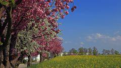 Frühling sechsfarbig...