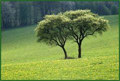 Frühling, Sonne und noch mehr ...