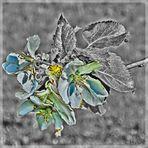Frühling - Spring Flower