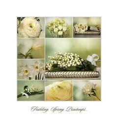 Frühling, Spring, Printemps...