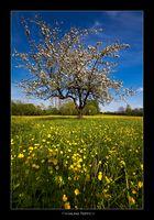 Frühling Teppich