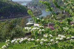 Frühling über dem Neckartal