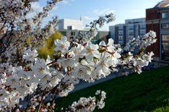 ... Frühling über der Stadt ...