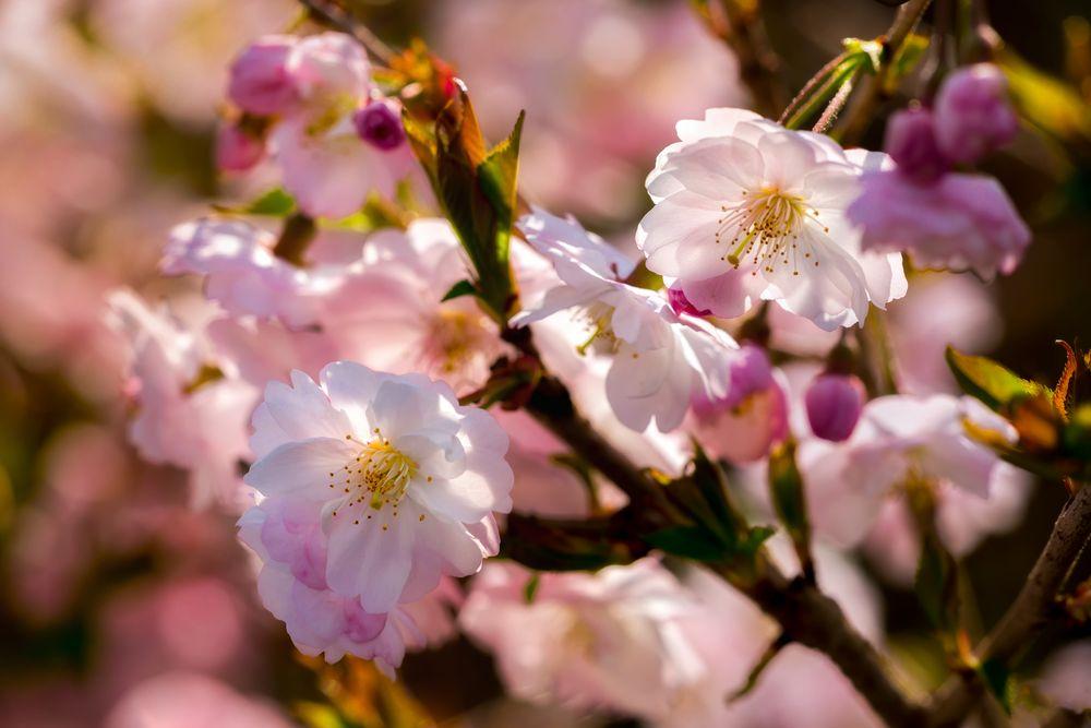 Frühling überall