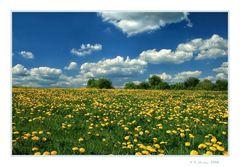 -Frühling und ....