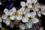 Frühling (VII)