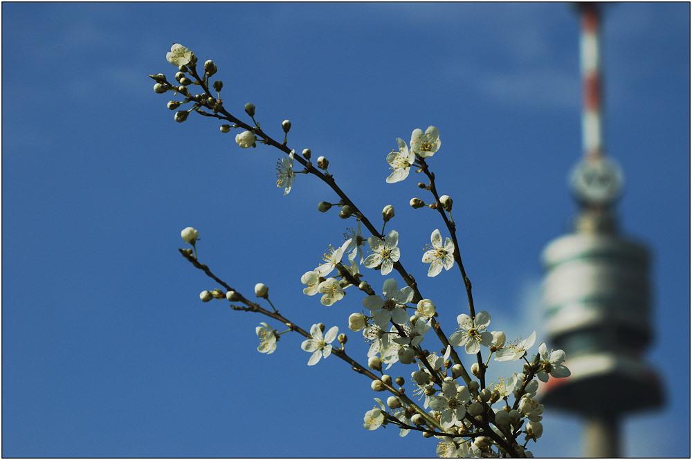 ... Frühling vor dem Donauturm ...