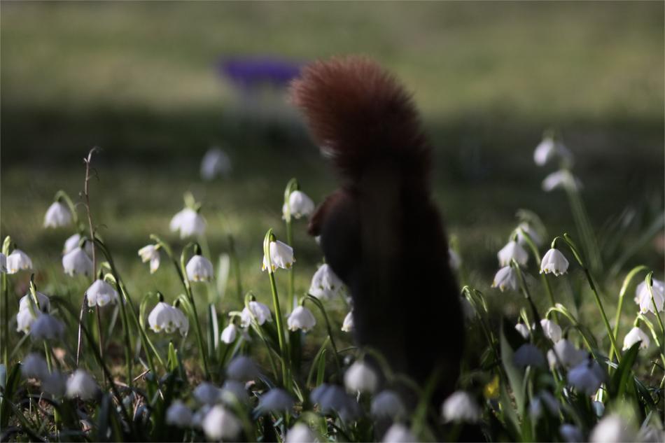 Frühling wa?