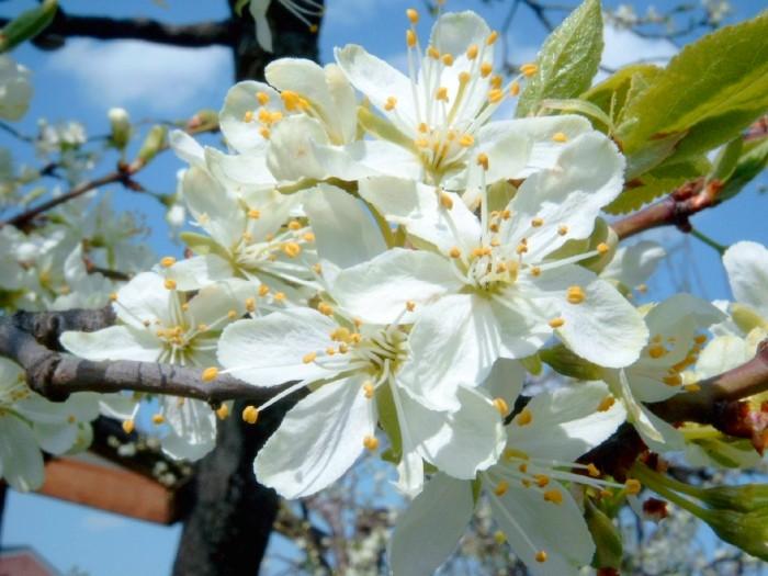 Frühling war's....