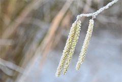 Frühling + Winter