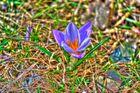 Frühling wird´s!