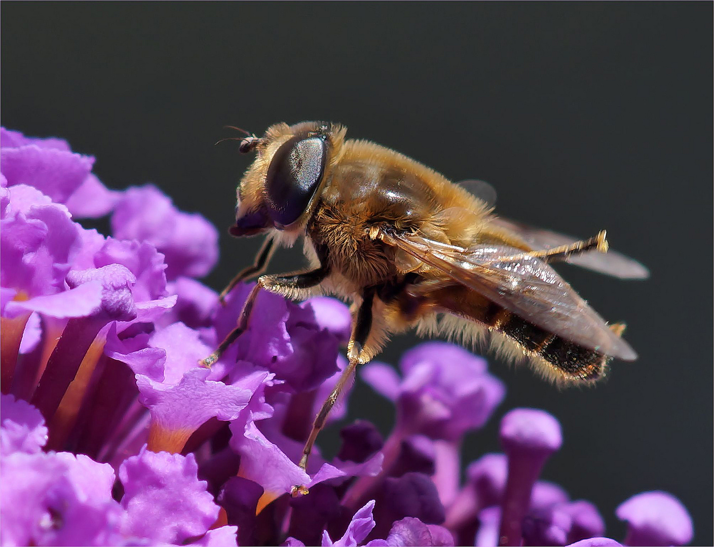 fr hling wo bleibst du foto bild tiere wildlife insekten bilder auf fotocommunity. Black Bedroom Furniture Sets. Home Design Ideas