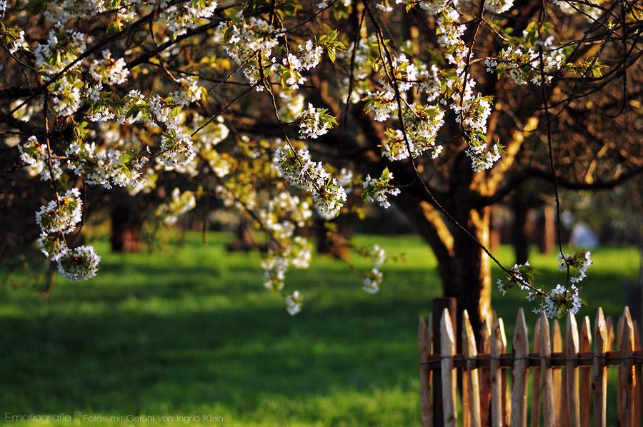 Frühling, wohin man schaut