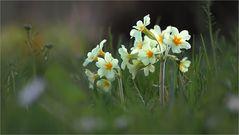Frühling zuHause