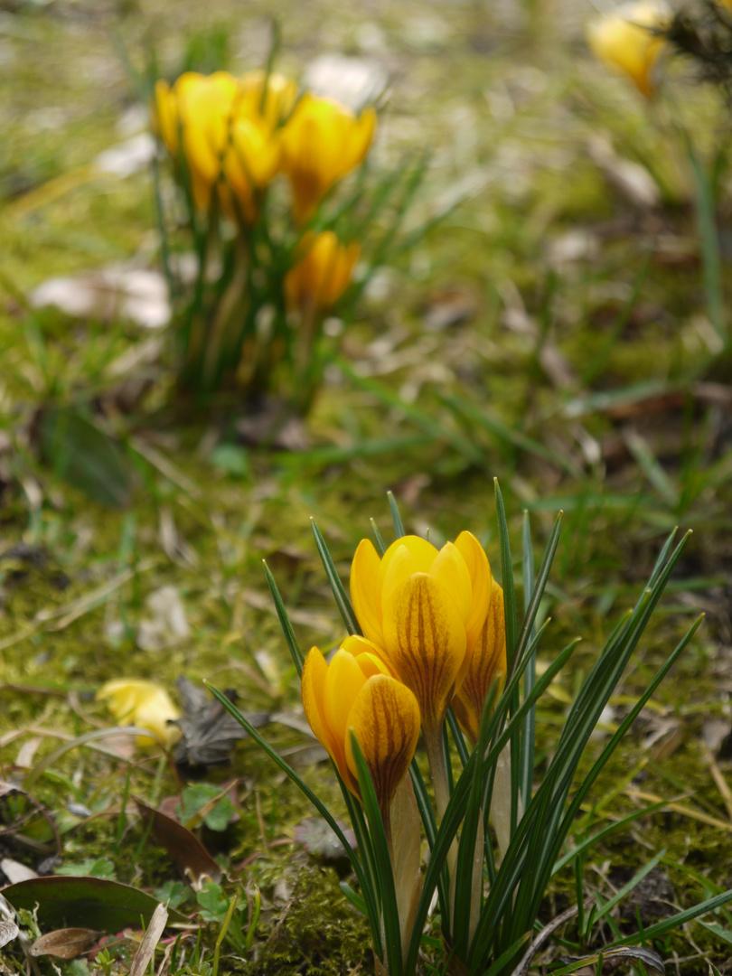 Frühling.1
