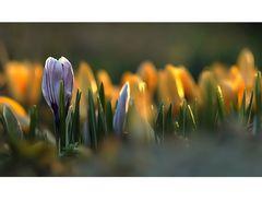 Frühling....März