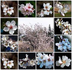 Frühlings-Anfang