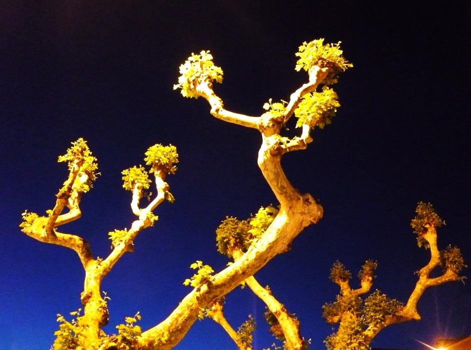 Frühlings - Ballett