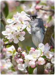 Frühlings ...
