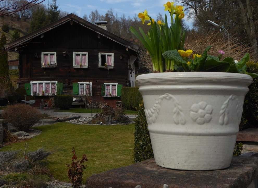 Frühlings-Ein-Topf