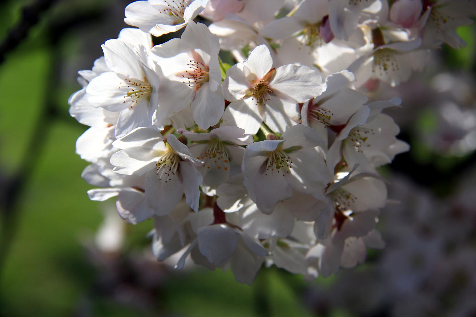 Frühlings Erwachen 15