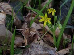 ... (Frühlings-)Erwachen (3)........