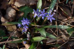 ... (Frühlings-)Erwachen (4)........